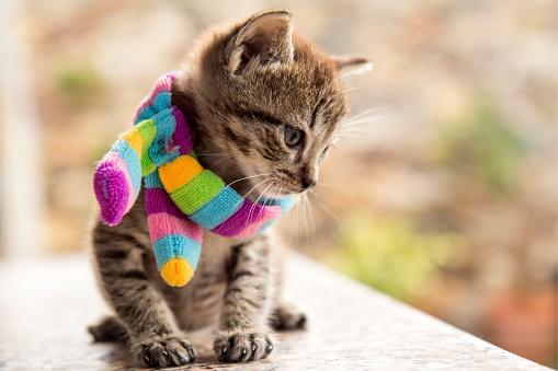 foto de Cuidados com os gatos no inverno