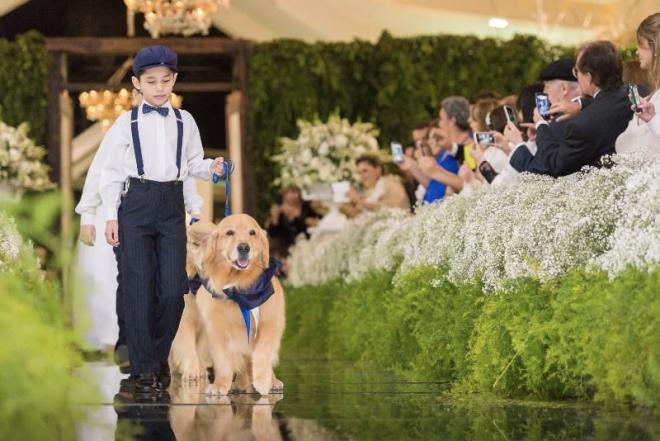 foto de Casamento: Pets esbanjam fofura na cerimônia, mas requerem cuidado e respeito