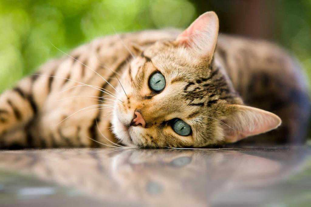 foto de Gatos sentem mais sensibilidade nos bigodes