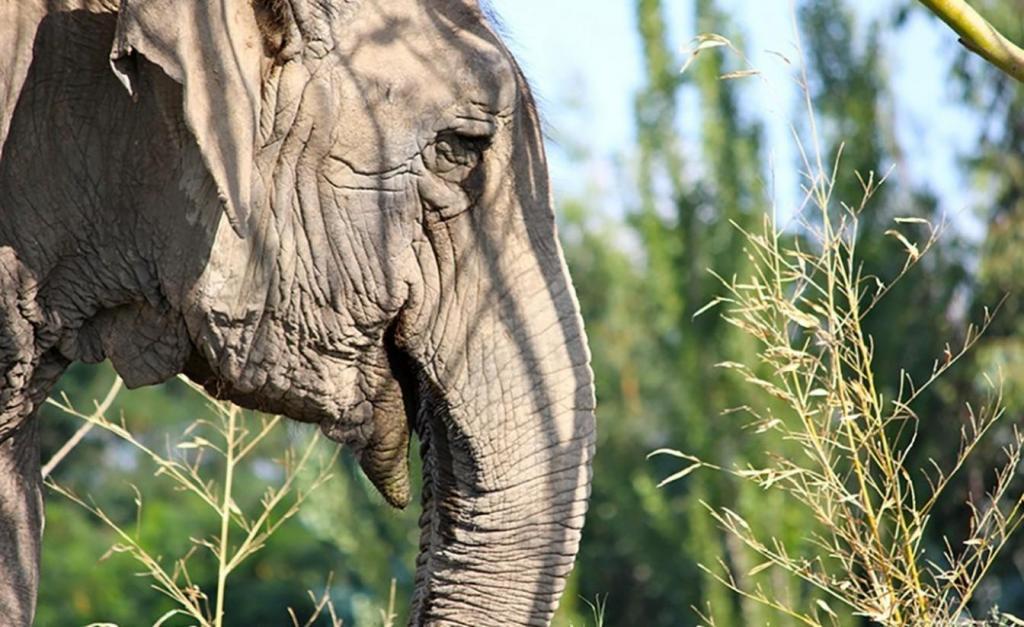foto de Guindaste, empilhadeiras e ação de 6h: Viracopos prepara operação para receber elefanta \'Ramba\'