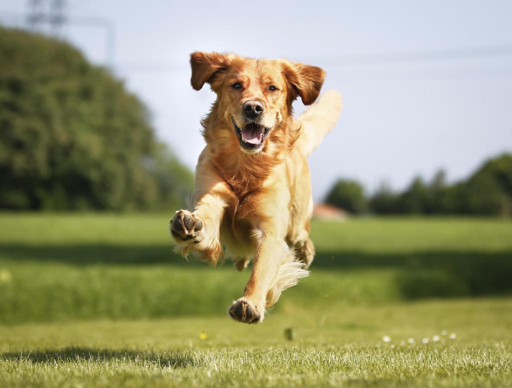 foto de Cachorros são bons companheiros para praticar corrida