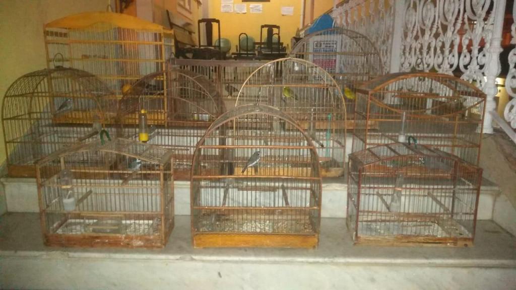 foto de Polícia Miliar descobre pássaros silvestres em gaiolas depois de briga de vizinhos