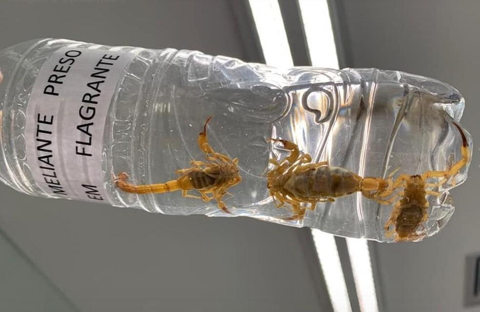 foto de Escorpiões são encontrados em corredor do Senado Federal, em Brasília