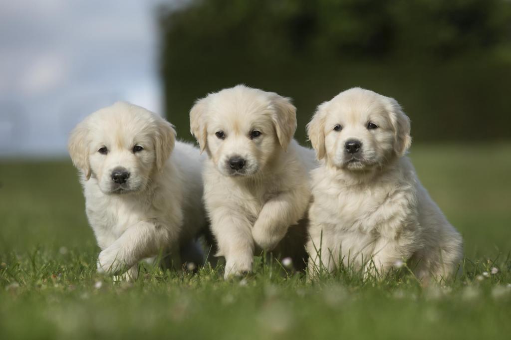 foto de Como preparar o ambiente para a chegada do cão?