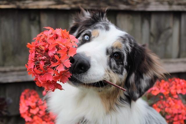 foto de Conheça as plantas venenosas para seu cãozinho