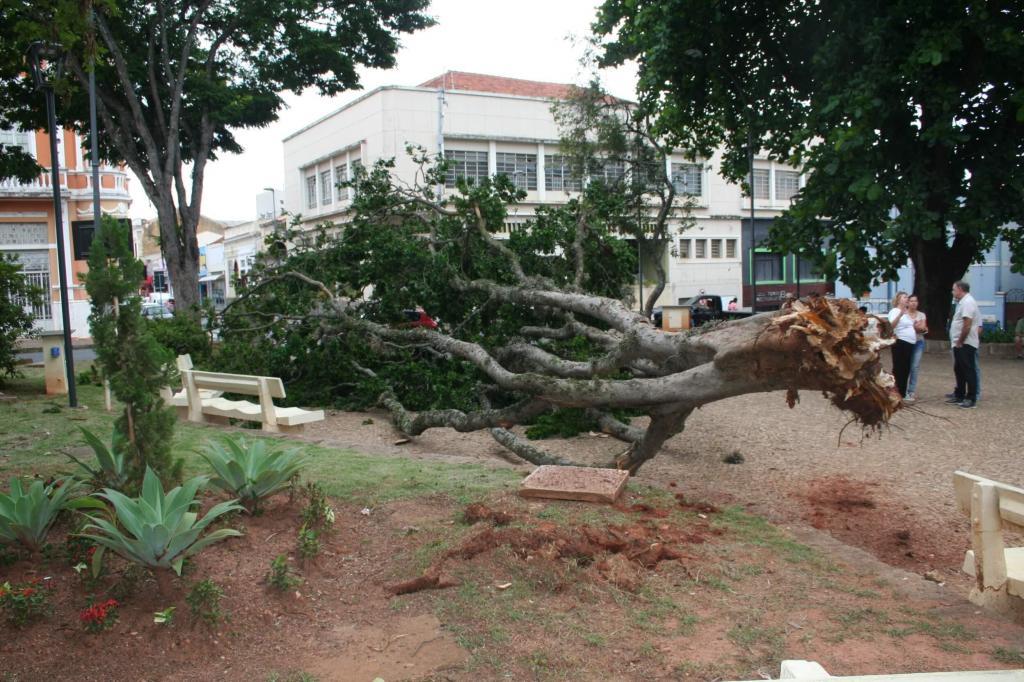 foto de Árvore cai na Praça da Catedral