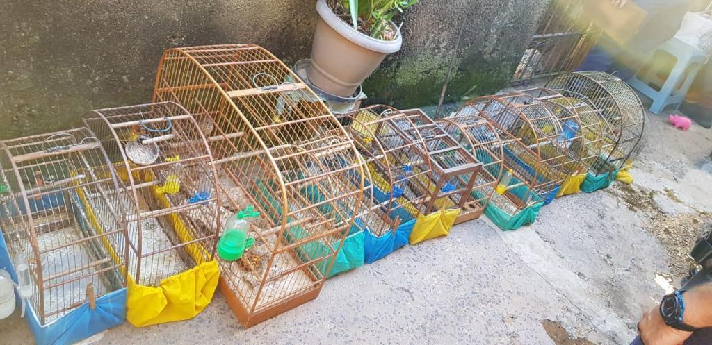 foto de Forças policiais encontraram 14 pássaros silvestres presos em gaiolas