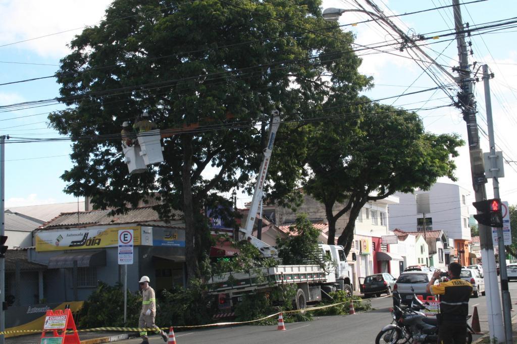 foto de Prefeitura promove substituições de árvores