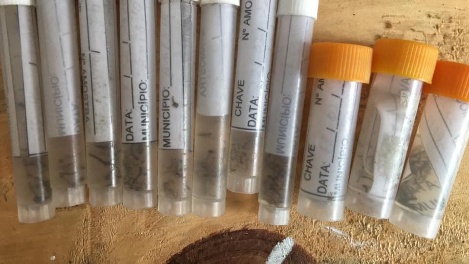 foto de Vigilância em Saúde encontrou 133 larvas da dengue em fevereiro