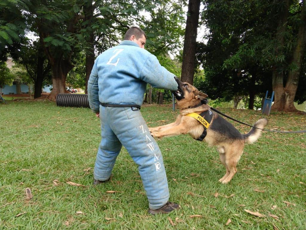 foto de Cães ganham espaço cativo com combate ao crime