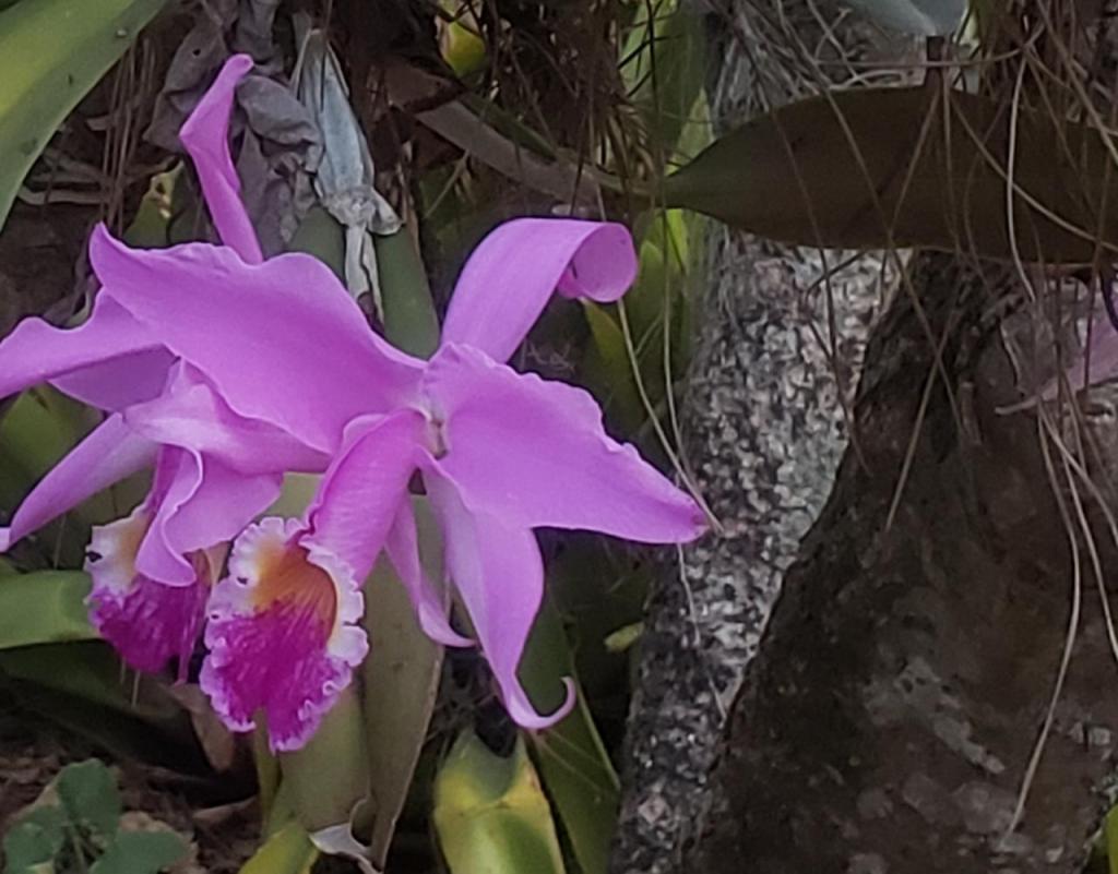 foto de Jardim Botânico Araribá ganha financiamento do Reino Unido