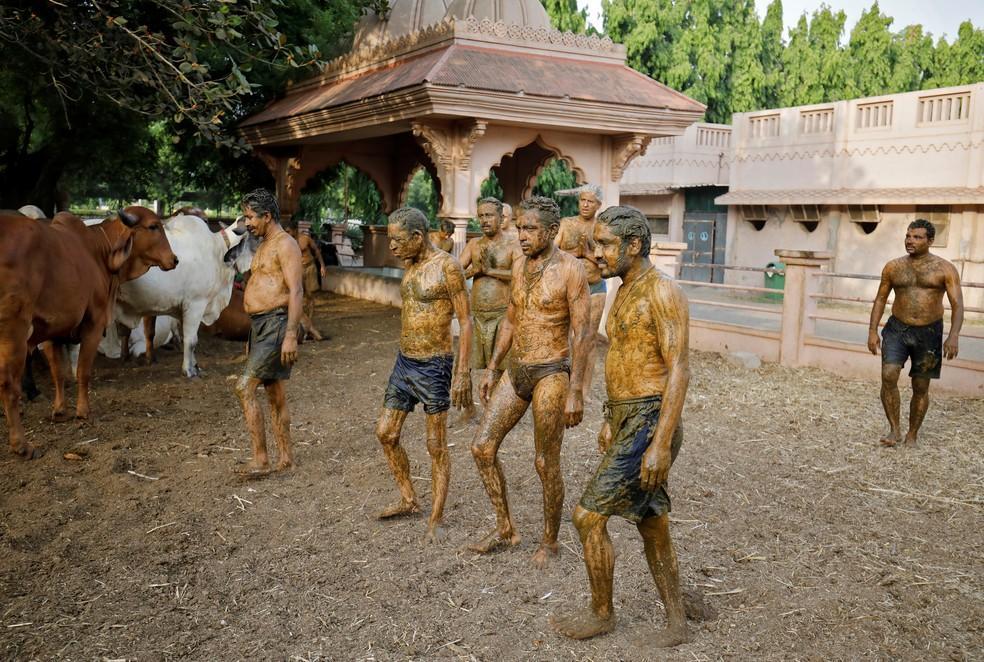 foto de Médicos da Índia pedem para que pessoas do país não usem esterco bovino contra a Covid-19
