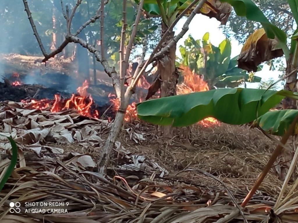 foto de Duas pessoas são detidas por promover queimadas