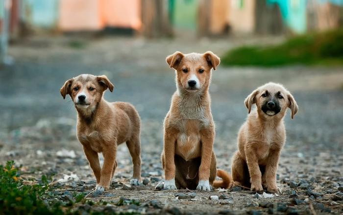 foto de Monte Alegre do Sul contará com Conselho Municipal de Proteção e Direitos dos Animais