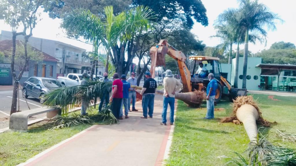 foto de Moradores apoiam projeto de arborização da Prefeitura de Artur Nogueira