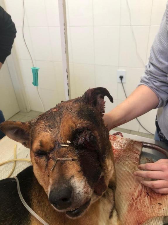 foto de Para se vingar a ex-esposa homem mata a paulada cachorro e acaba preso