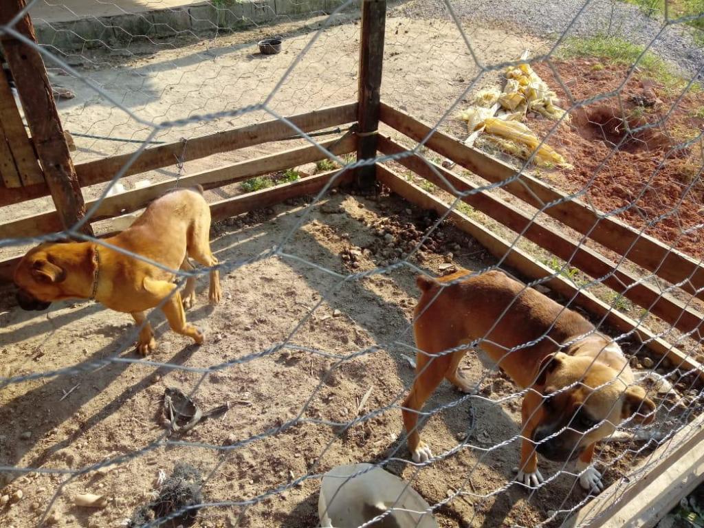 foto de GCM de Amparo averigua maus tratos a animais